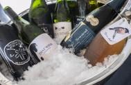 Plett Wine and Bubbly Festival 2017 _1195