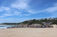 Penguin release at Lookout beach in Plettenberg Bay