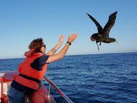 Orca Foundation volunteer program