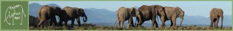 Knysna Elephant Park in Plettenberg Bay | Elephant Park in Plett