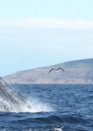 Plett Tourism shows off marine wildlife to travel agents