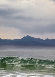 Giants of sea and entertainment descend on Plett during whale season