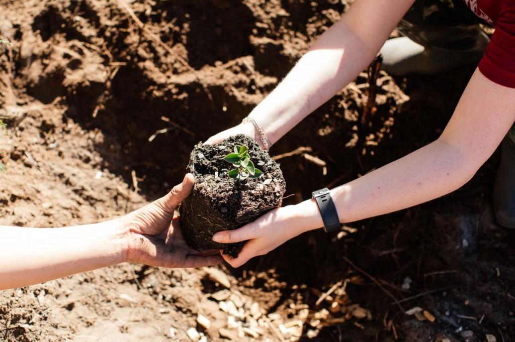 Planting a Num-num