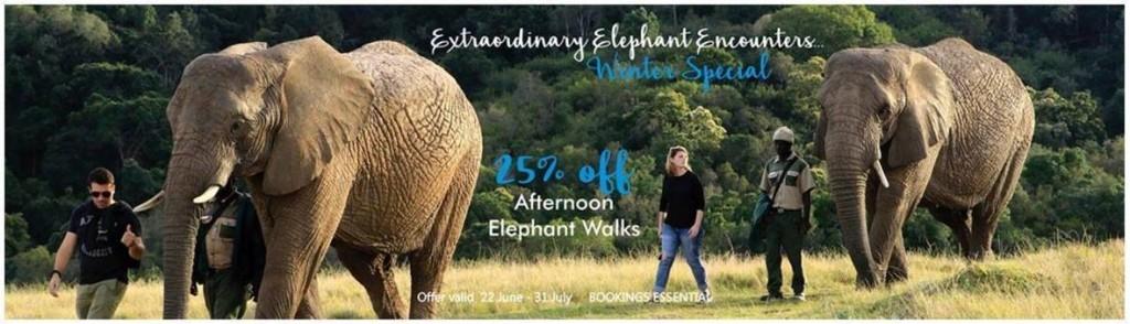 knysna elephant park winter special 2