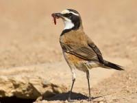 Flight for Birders Course