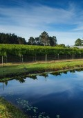 Luka Wine Farm wins Gold & Silver at Michelangelo Awards
