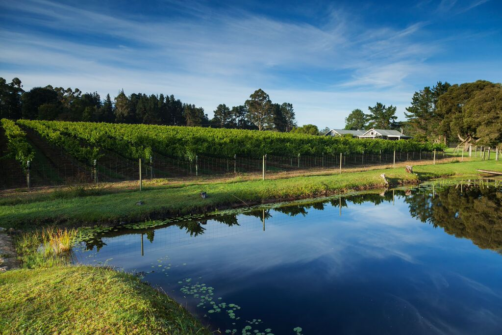 Luka wine farm in Plett