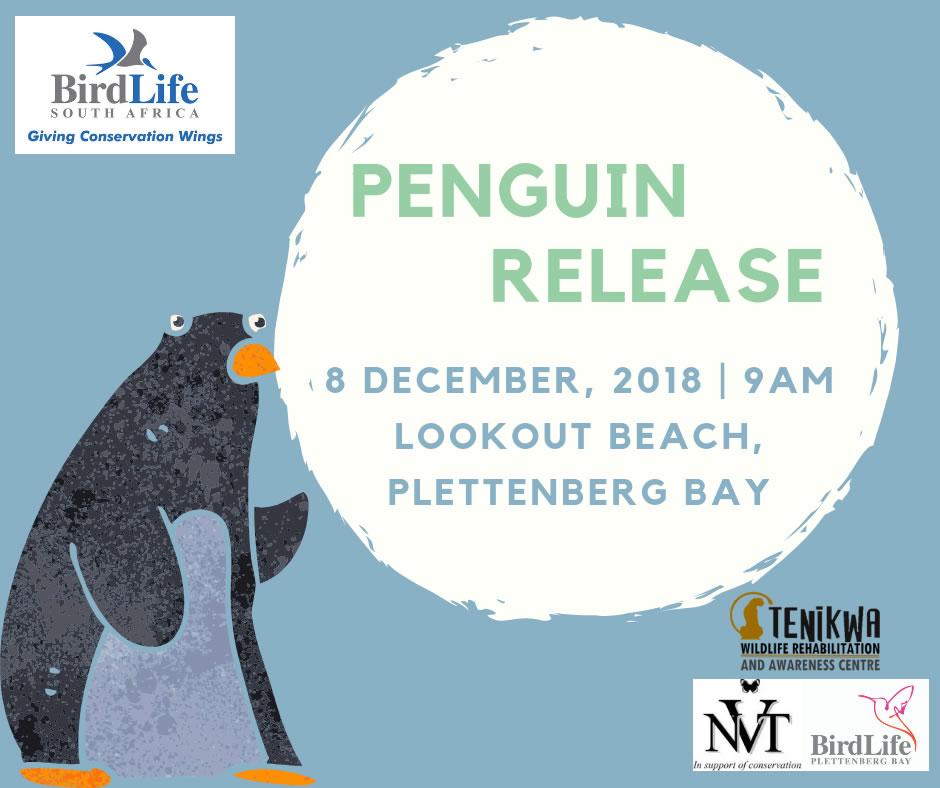 Penguin release #6 in Plett