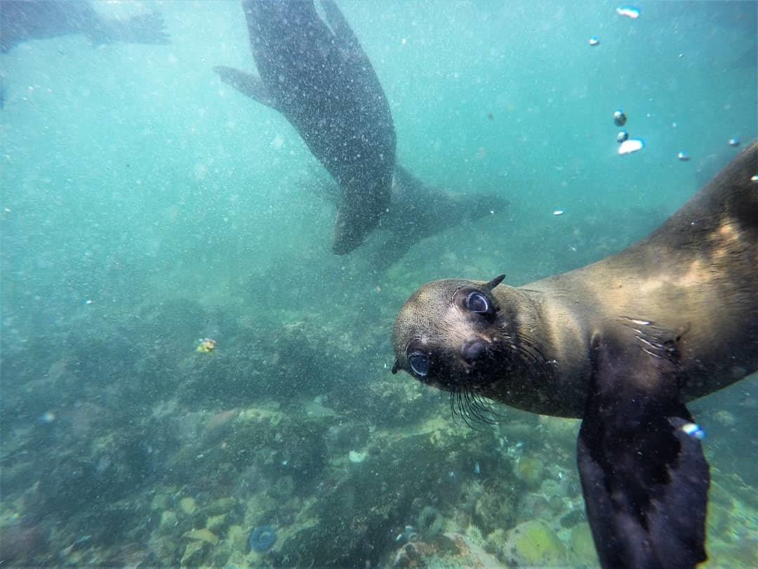 Plett Marine Life. Photo - Offshore Adventures