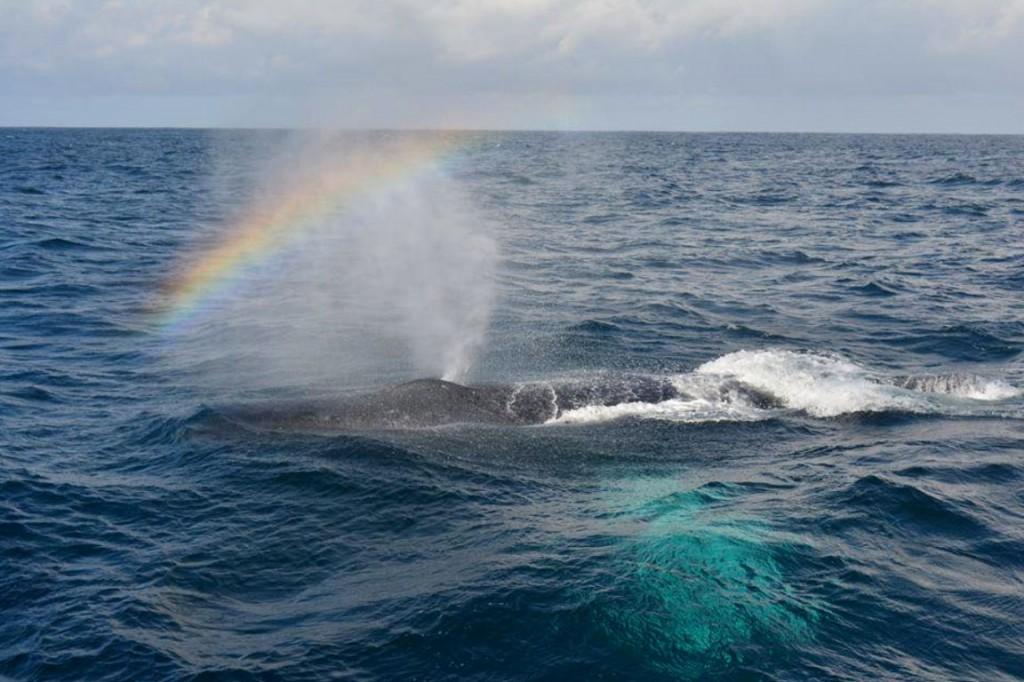 @oceansafaris