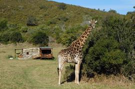 30% off @ Giraffe View Safari Camp