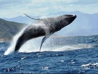 Gallery: Marvelous marine life in Plett for World Oceans Day