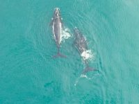 Video: The start of whale season