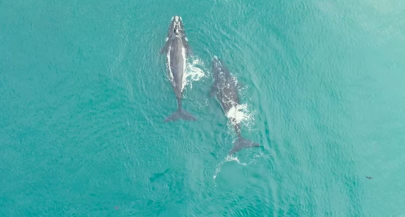 video whale season in plett