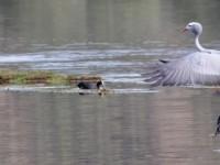 Bitou Birding Retreat: Heaven to Die Hel… & back