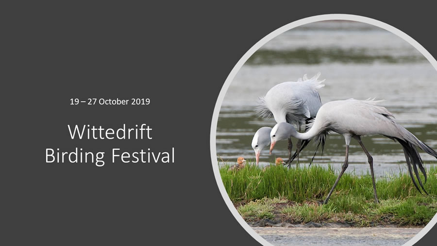 Wittedrift Birding Festival