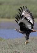 New bird-watching festival in Plett