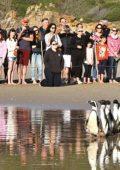 Marching orders for Plett penguins