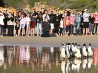 Marching orders for Plett penguins