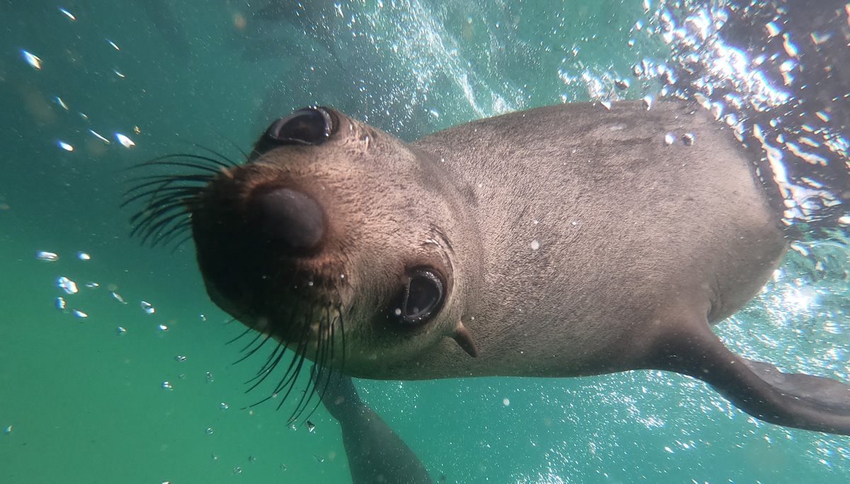 Plett Seal Adventures - Swim with seals in Plettenberg Bay, South Africa