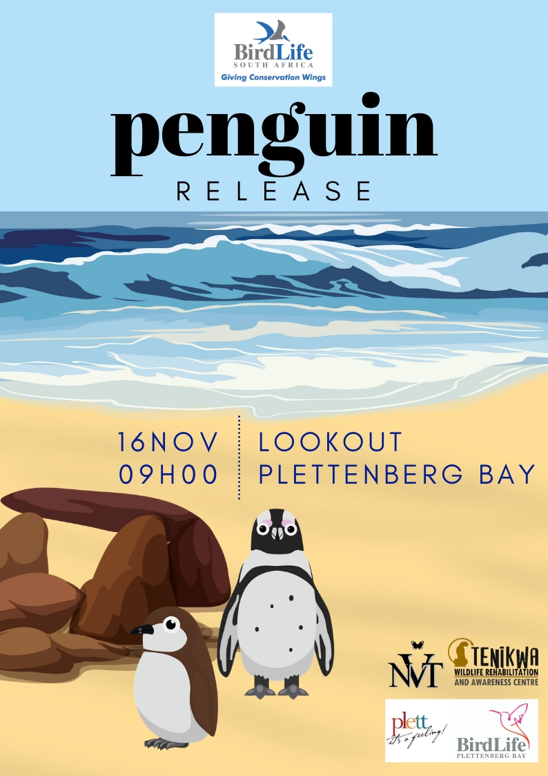 Penguin Release Saturday, 16th November at 9am from Lookout beach