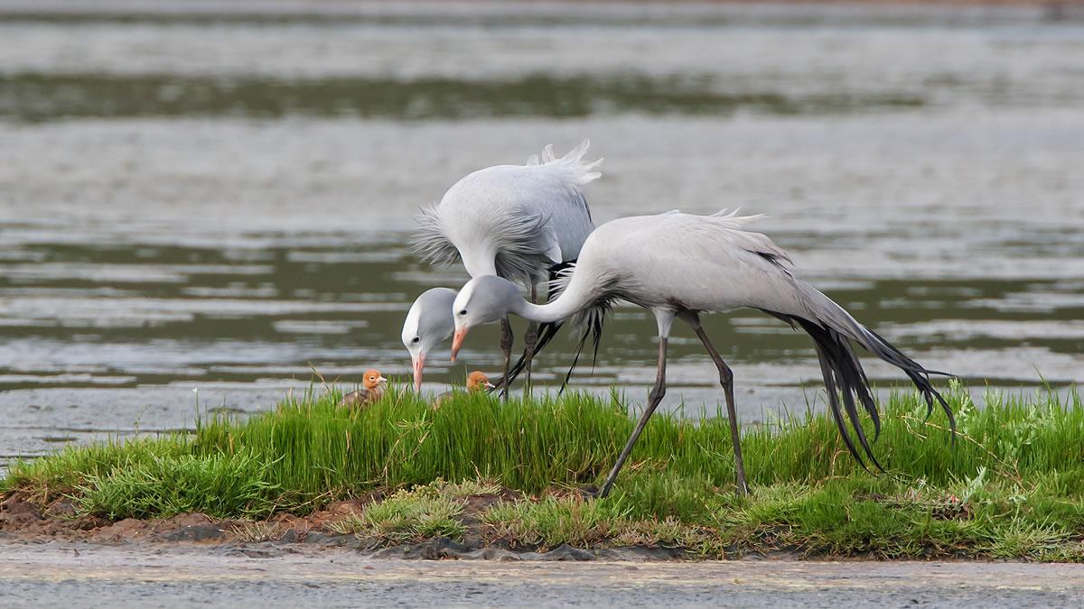 bitouvlei-birding