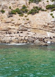 Marine Biologist's report to assist with problem of seal carcasses on Plett beaches