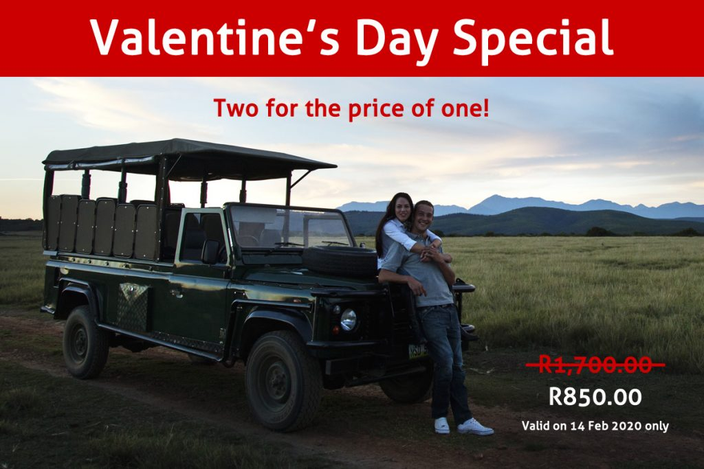 Join us for a game drive on Friday 14th February with the special person in your life for only R850.00 (normal price is R1,700.00 for two people).