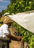 What does lockdown mean for Plett's farmers?