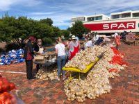 How can you help the people of Plett?