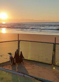 Penguin release streamed live from Lookout beach in Plett