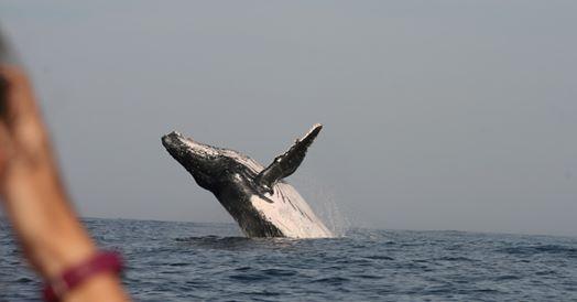 ocean blue whale watching