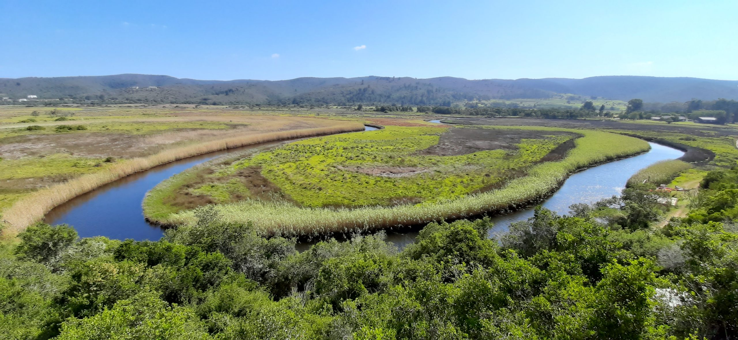 Bitou River Wetland from Emily Moon