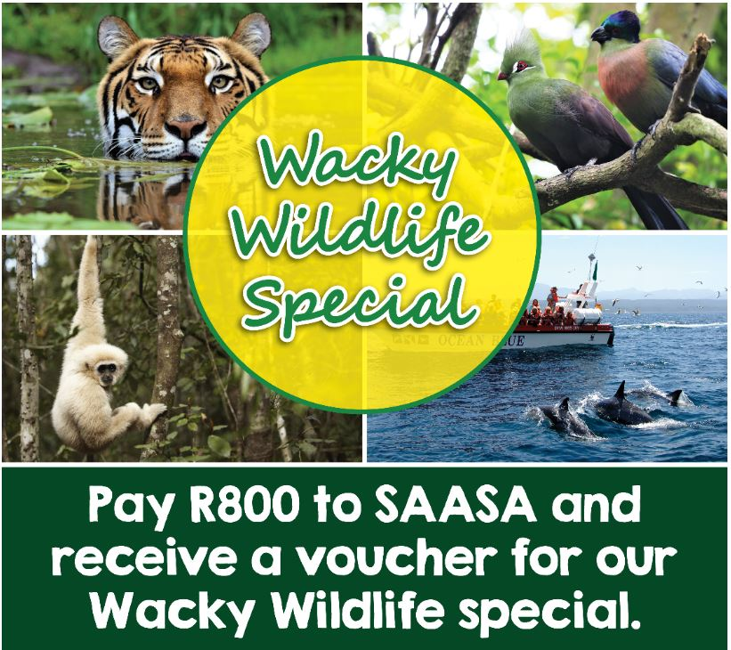 Monkeyland, Birds of Eden and the Jukani Wildlife Sanctuary and also a whale and dolphin cruise with Ocean Blue Adventures.