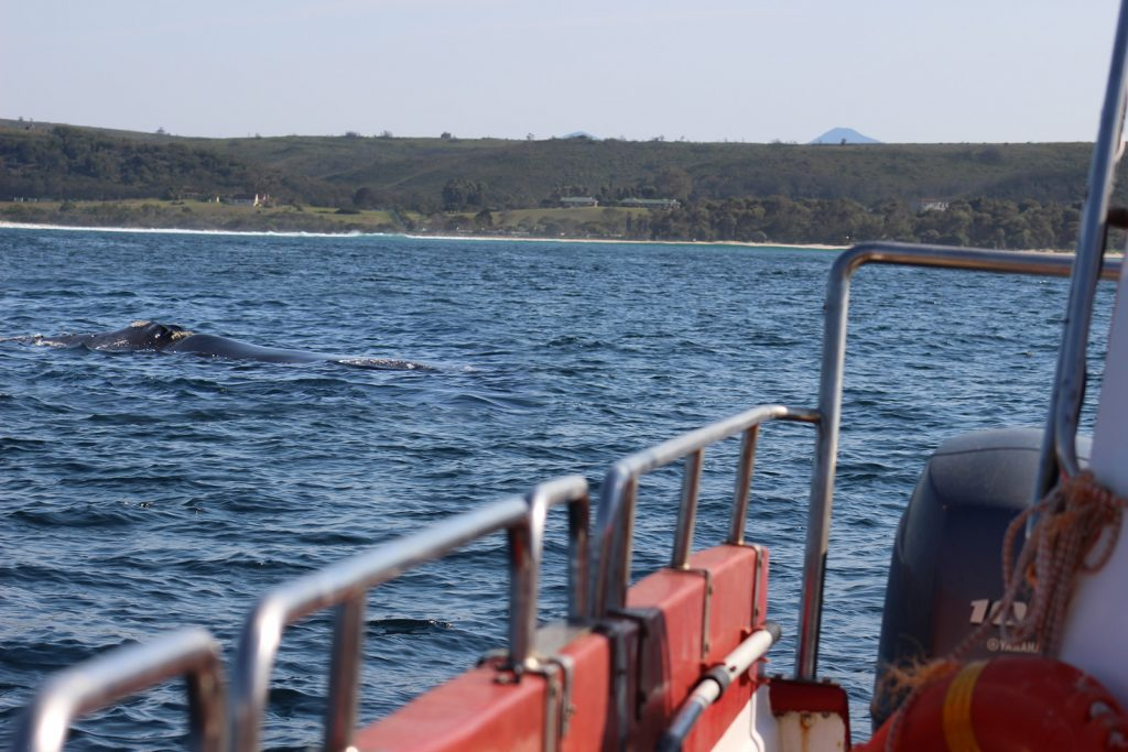 Viewing whales from boats in Plett is a business that boosts tourism in the area.