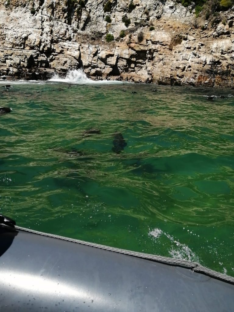 Offshore adventure seal watching with Thandi and Andy