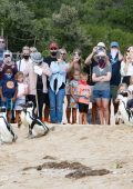 Endangered African penguins find some R&R in Plettenberg Bay