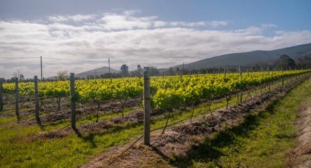 Lodestone Wine and Olive farm in Plettenberg Bay
