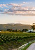 Plett vineyards shine in Gilbert & Gaillard International Challenge