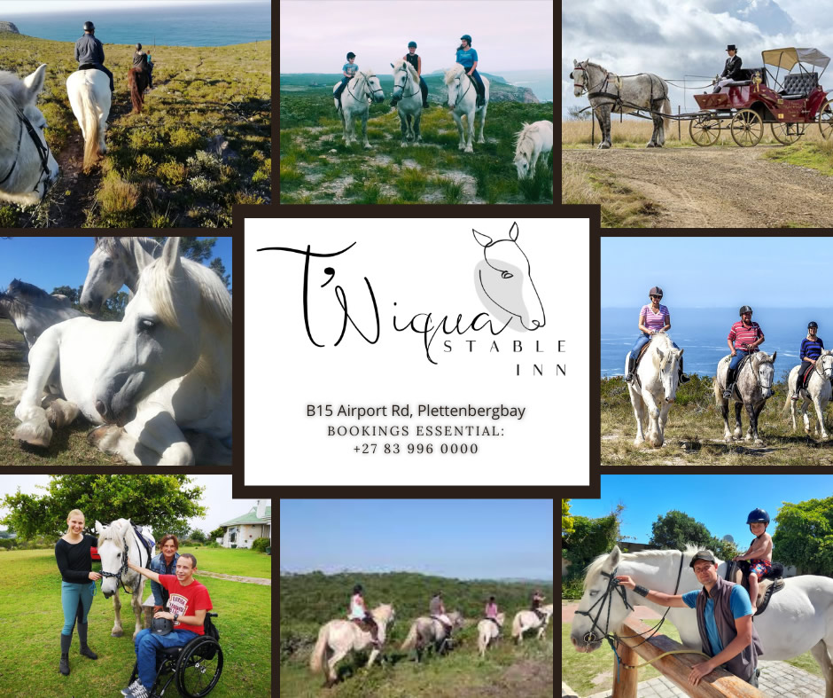 Equestrian activities in Plett - Horse trails and riding lessons