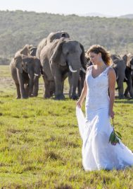 It's time to dust off the wedding cobwebs and head to Plett