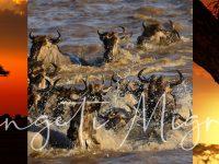 Bucket List Serengeti Migration Talk