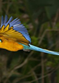 A second chance at Birds of Eden for two sick parrots