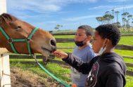 Feeding a horse at Cairnbrogie Farm in Plett