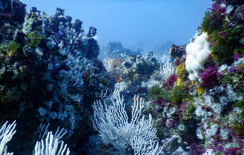 Underwater in Plettenberg Bay